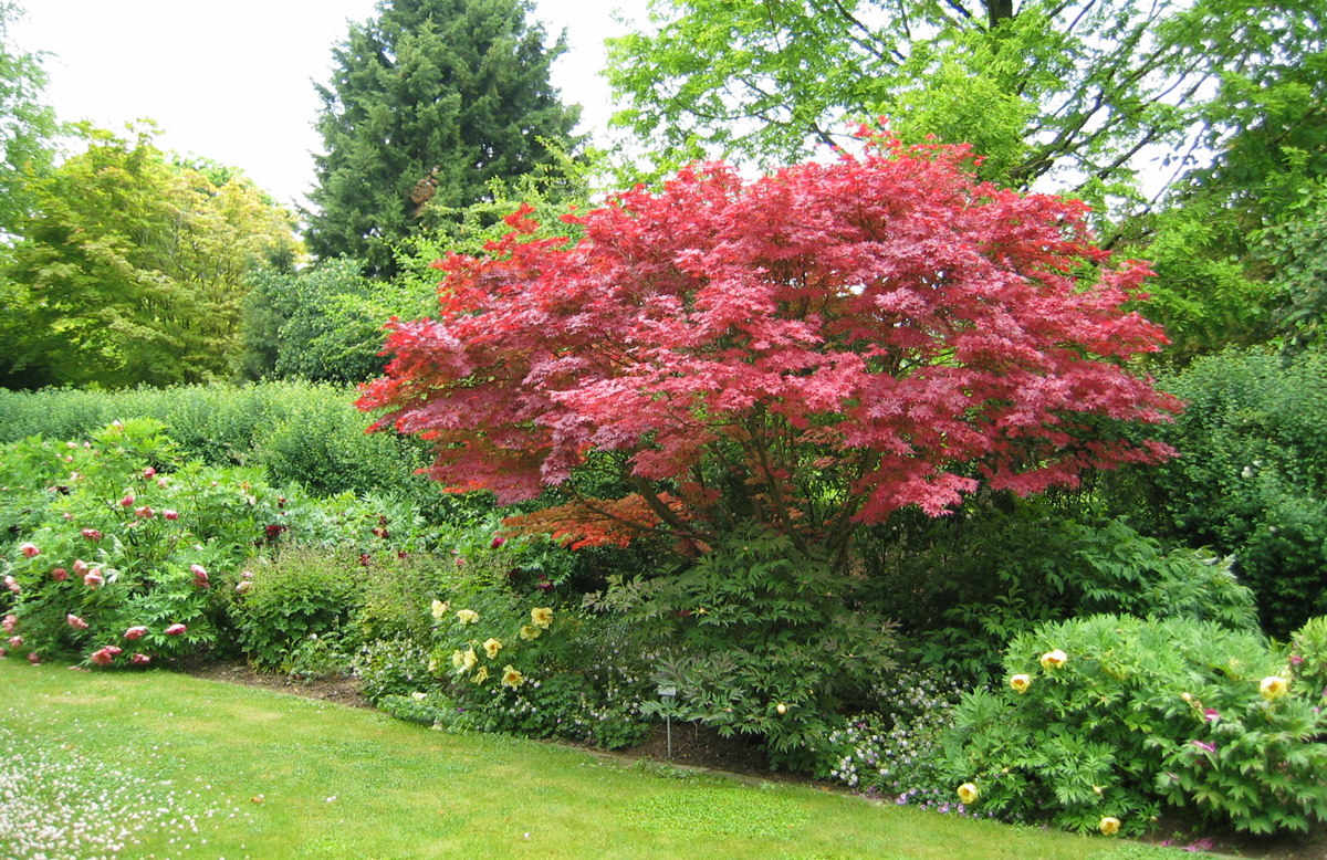 Welche Bäume eignen sich für Ihren Garten? - Gartencenter Welter